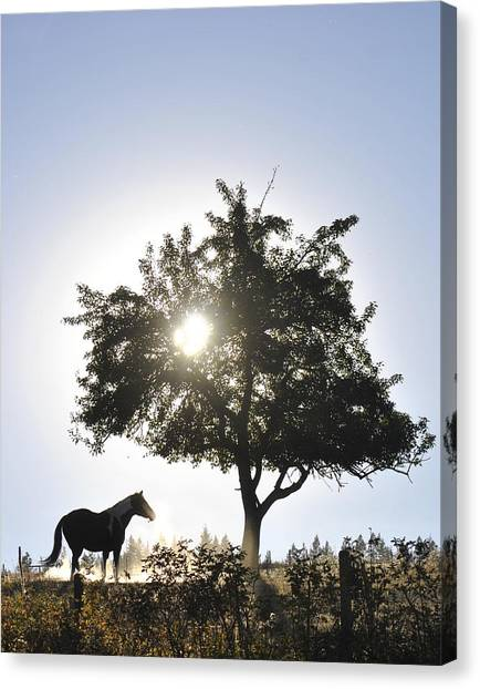 Horse Dreaming Under Tree Canvas Print