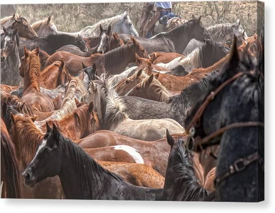 Horse Drive Chaos Canvas Print