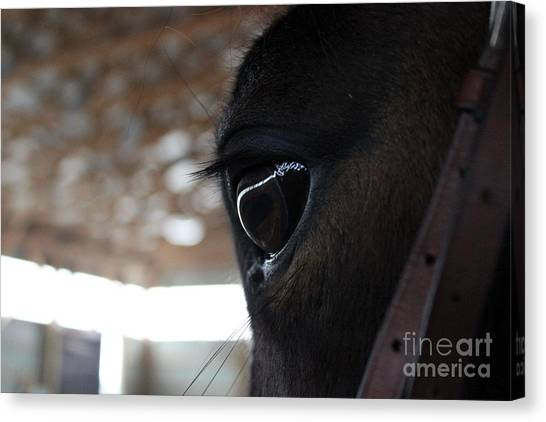 Horse Eye From Behind Canvas Print