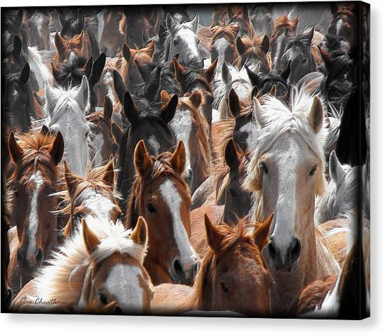 Horse Faces Canvas Print