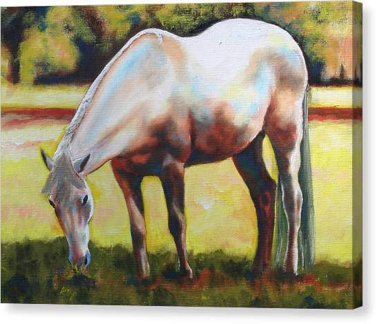 Horse Grazing In The Shade Canvas Print