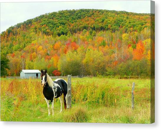 Horse In Autumn Field Canvas Print