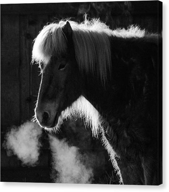 Head Canvas Print - Horse In Black And White Square Format by Matthias Hauser