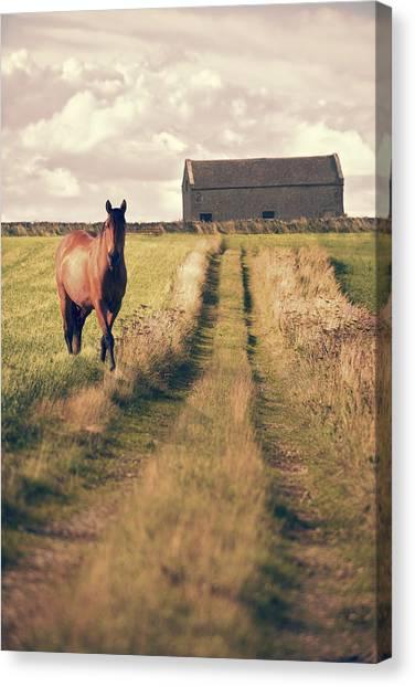 Moorland Canvas Print - Horse In Field by Amanda Elwell