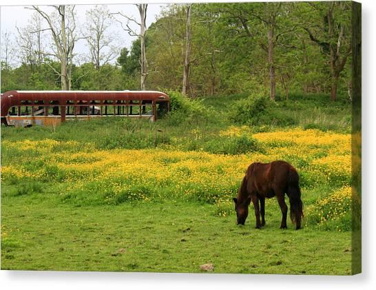 Horse In The Meadow Near Weetamoo Canvas Print