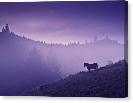 Purple Canvas Print - Horse In The Mist by Yuri Santin
