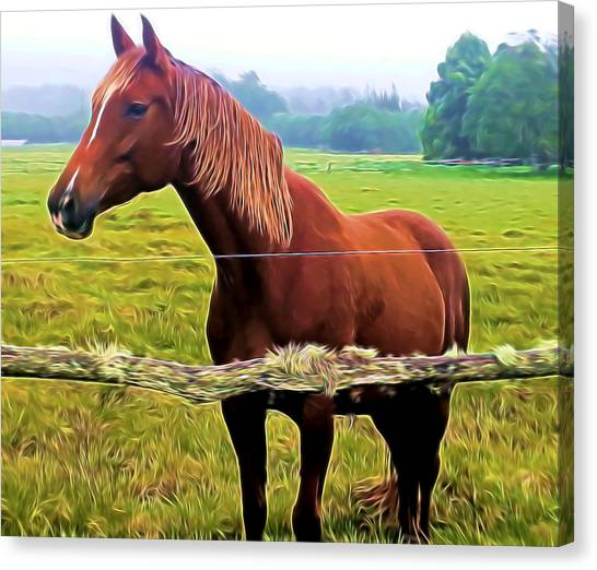 Horse In The Pasture Canvas Print