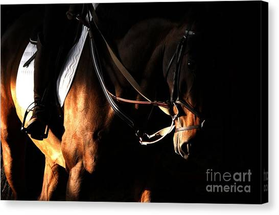 Horse In The Shade Canvas Print