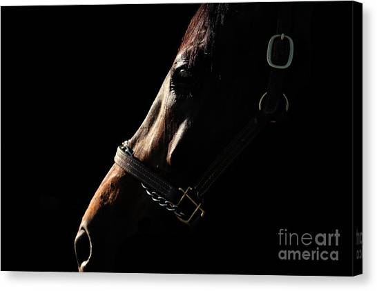 Horse In The Shadows Canvas Print