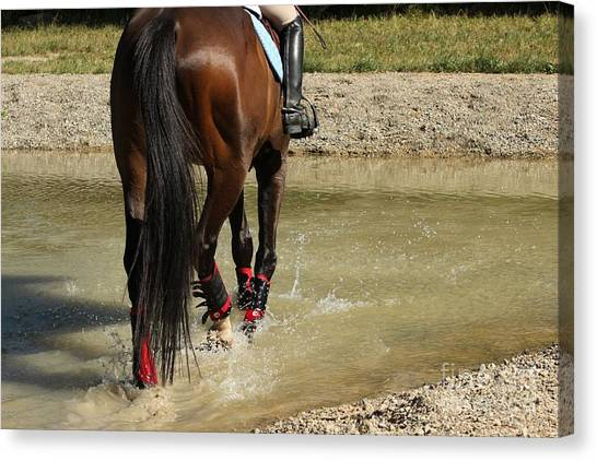 Horse In Water Canvas Print