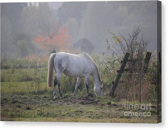 Horse On A Peaceful Day Canvas Print
