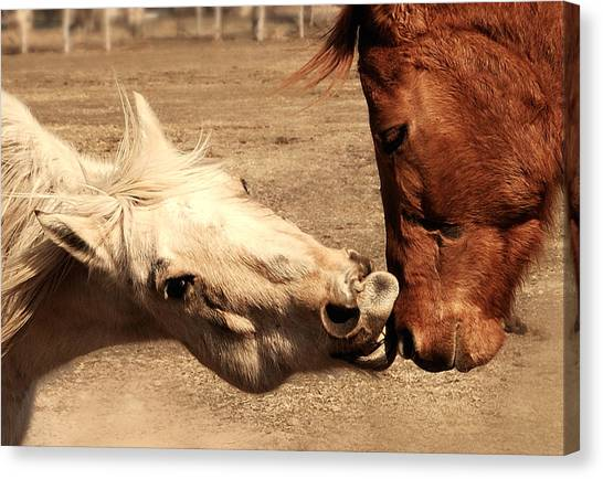 Funny Horses Canvas Print - Horse Play by Steven Milner