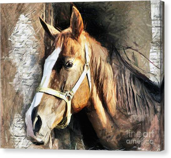 Horse Portrait - Drawing Canvas Print