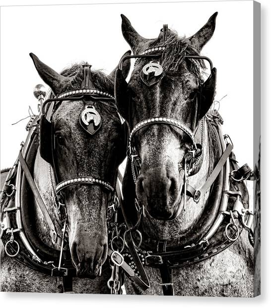Draft Horses Canvas Print - Horse Power by Olivier Le Queinec
