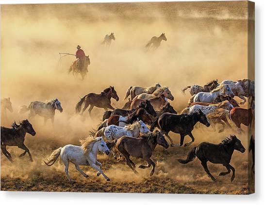 Cowboy Canvas Print - Horse Run by Adam Wong