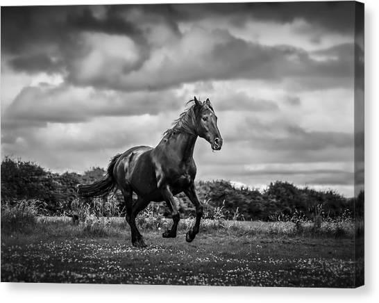 Horse Running In Field Canvas Print by Rory Turnbull / Eyeem
