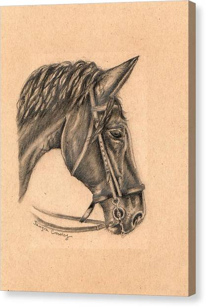Horse Sketch Canvas Print