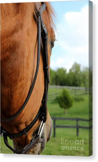 Horse View Canvas Print