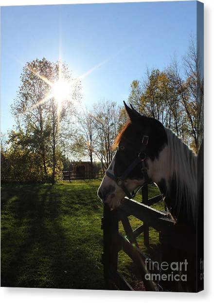 Horse With Sunburst Canvas Print