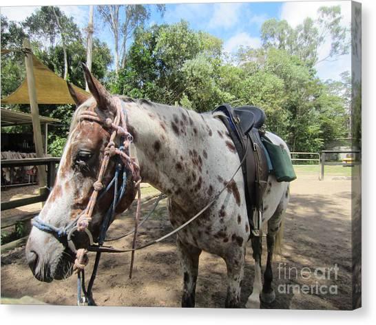 Daintree Rainforest Canvas Print - Horseback Riding by Annie Fell Photography