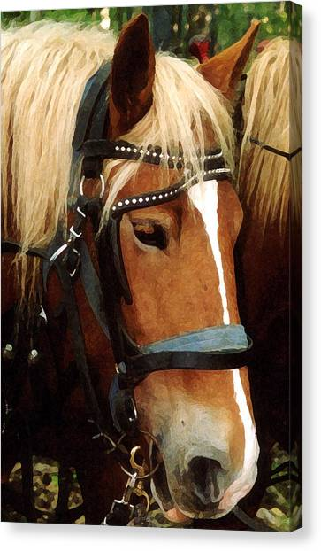 Horsehead Canvas Print by Susan Crossman Buscho