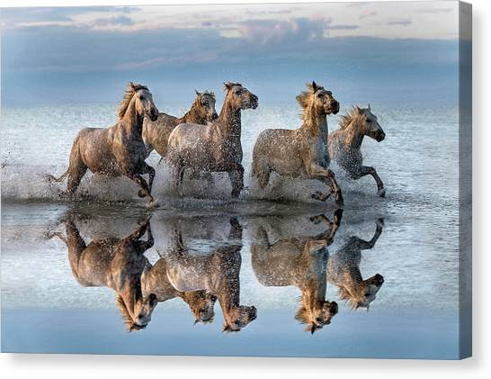 Horses And Reflection Canvas Print by Xavier Ortega