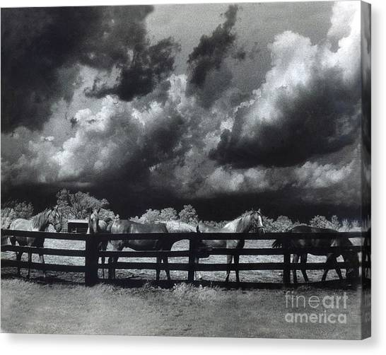 Dreamy Horse Canvas Print - Horses Black And White Infrared Stormy Sky Nature Landscape by Kathy Fornal