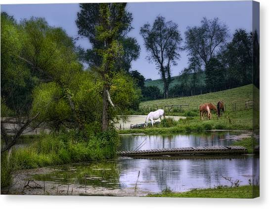 Ponies Canvas Print - Horses Grazing At Water's Edge by Tom Mc Nemar