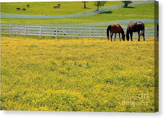 Horses Grazing In Field Canvas Print
