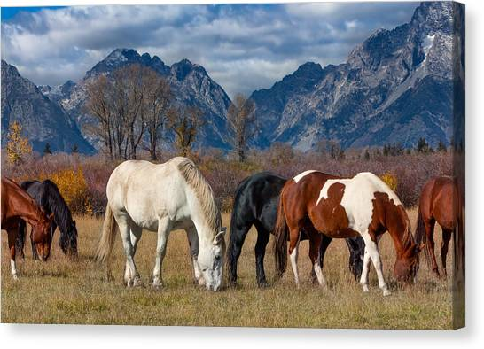 Black Stallion Canvas Print - Horses Grazing In The Grand Tetons by Kathleen Bishop
