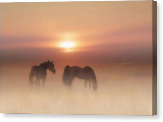 Horses In A Misty Dawn Canvas Print
