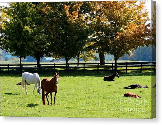Horses In Fall Canvas Print