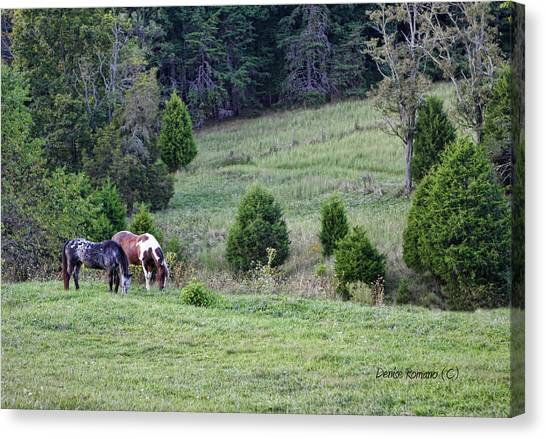 Horses In Summer Canvas Print