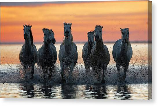 Sea Horse Canvas Print - Horses In The  Coming  With The Sun by Julio Lozano Brea