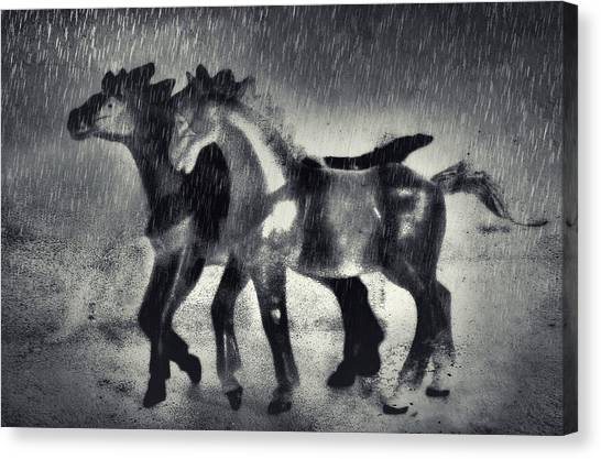 Horses In Twilight Canvas Print