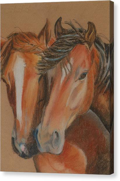 Horses Looking At You Canvas Print by Teresa Smith