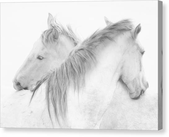 Kiss Canvas Print - Horses by Marie-anne Stas