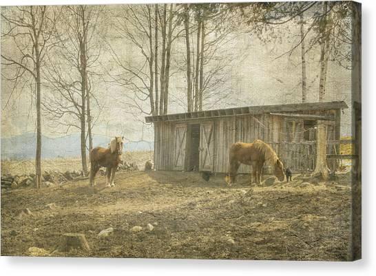 Horses On The Farm Canvas Print
