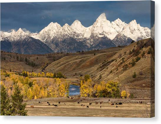 Horses On The Gros Ventre River Canvas Print