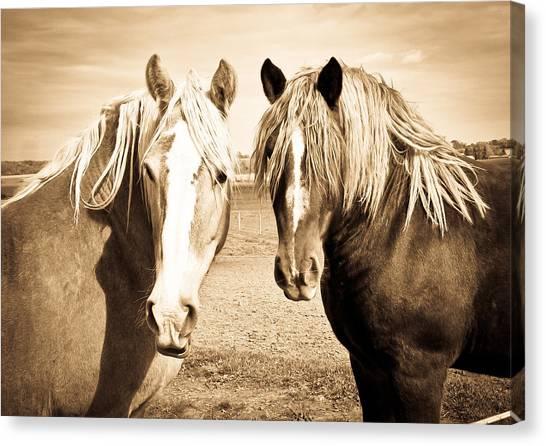 Horses  Canvas Print by Paulina Szajek