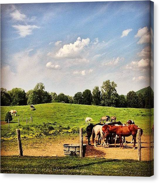 Horse Farms Canvas Print - #horses #rescue #farm #countryliving by Jennifer Pete