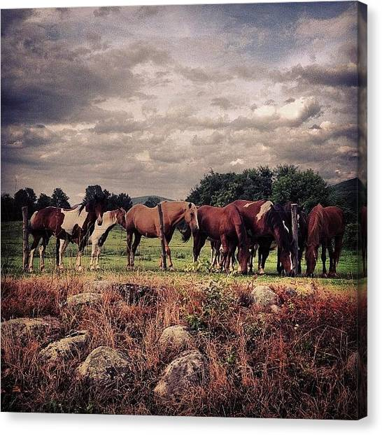 Horse Farms Canvas Print - #horses #rescue #landscape #northjersey by Jennifer Pete