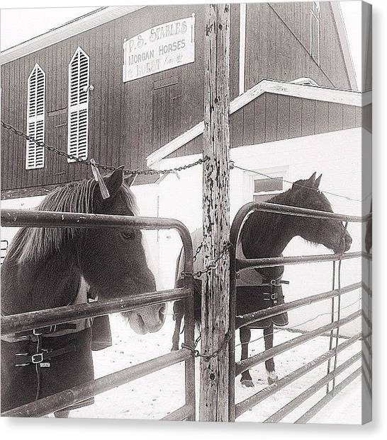 Horse Farms Canvas Print - #horses #winter #pennsylvania #farms by Sara Lauver