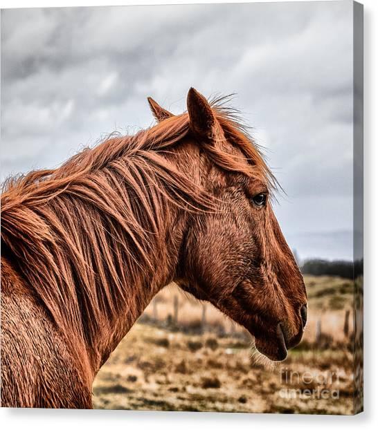 Horse Canvas Print - Horsey Horsey by John Farnan
