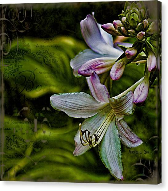 Hosta Lilies With Texture Canvas Print