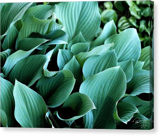 Hostas Canvas Print