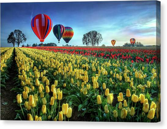 Hot Air Balloons Canvas Print - Hot Air Balloons Over Tulip Field by William Lee