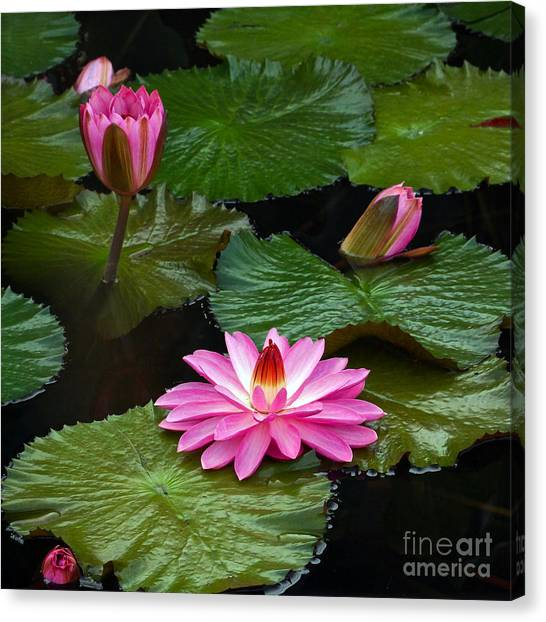 Hot Pink And Green Tropical Waterlilies Canvas Print
