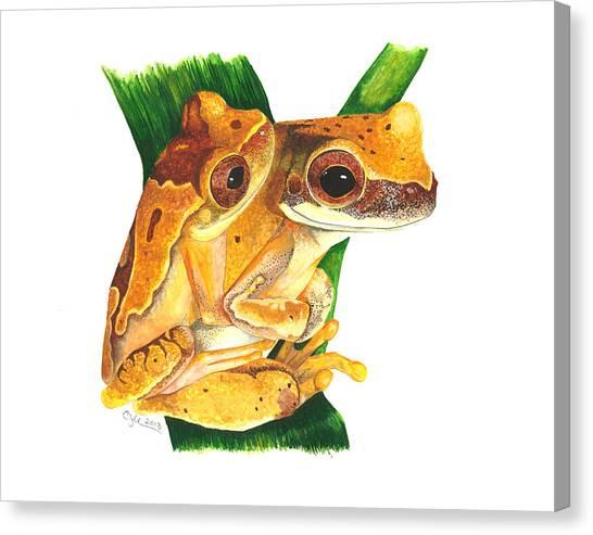 Hourglass Treefrog Canvas Print