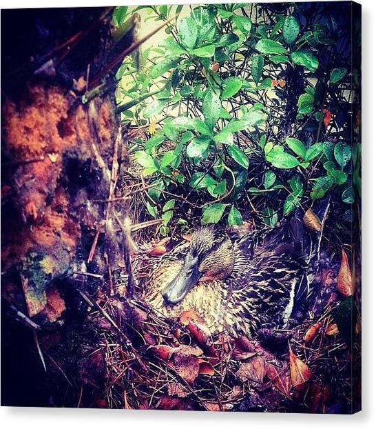 Water Birds Canvas Print - House Guess #photoshopexpress #iphone5 by Scott Pellegrin